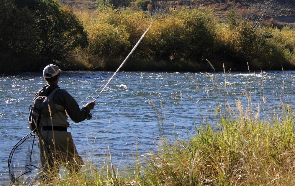 La pesca su un mangiatore nella caduta su un crucian