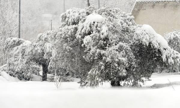 Neve danni causati alle imprese agricole ecco come fare for Subito it molise attrezzature agricole