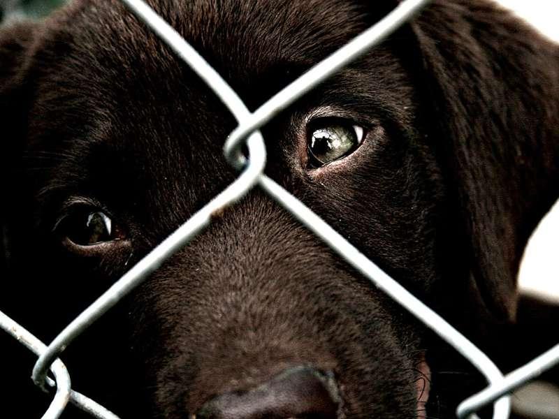 Randagismo se adotti un cane non paghi le tasse comunali for Tasse comunali