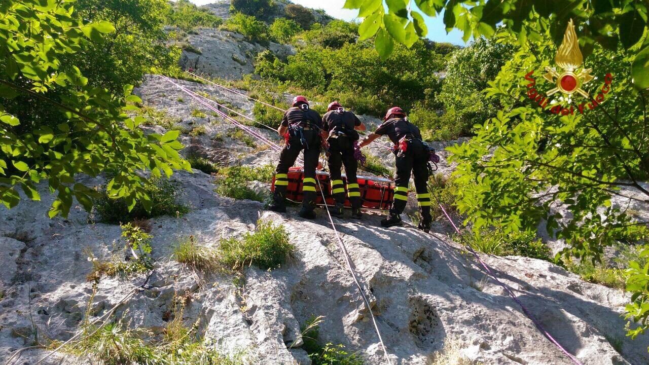 Capriolo cade nel canale a Bellinzago, salvato dai vigili del fuoco