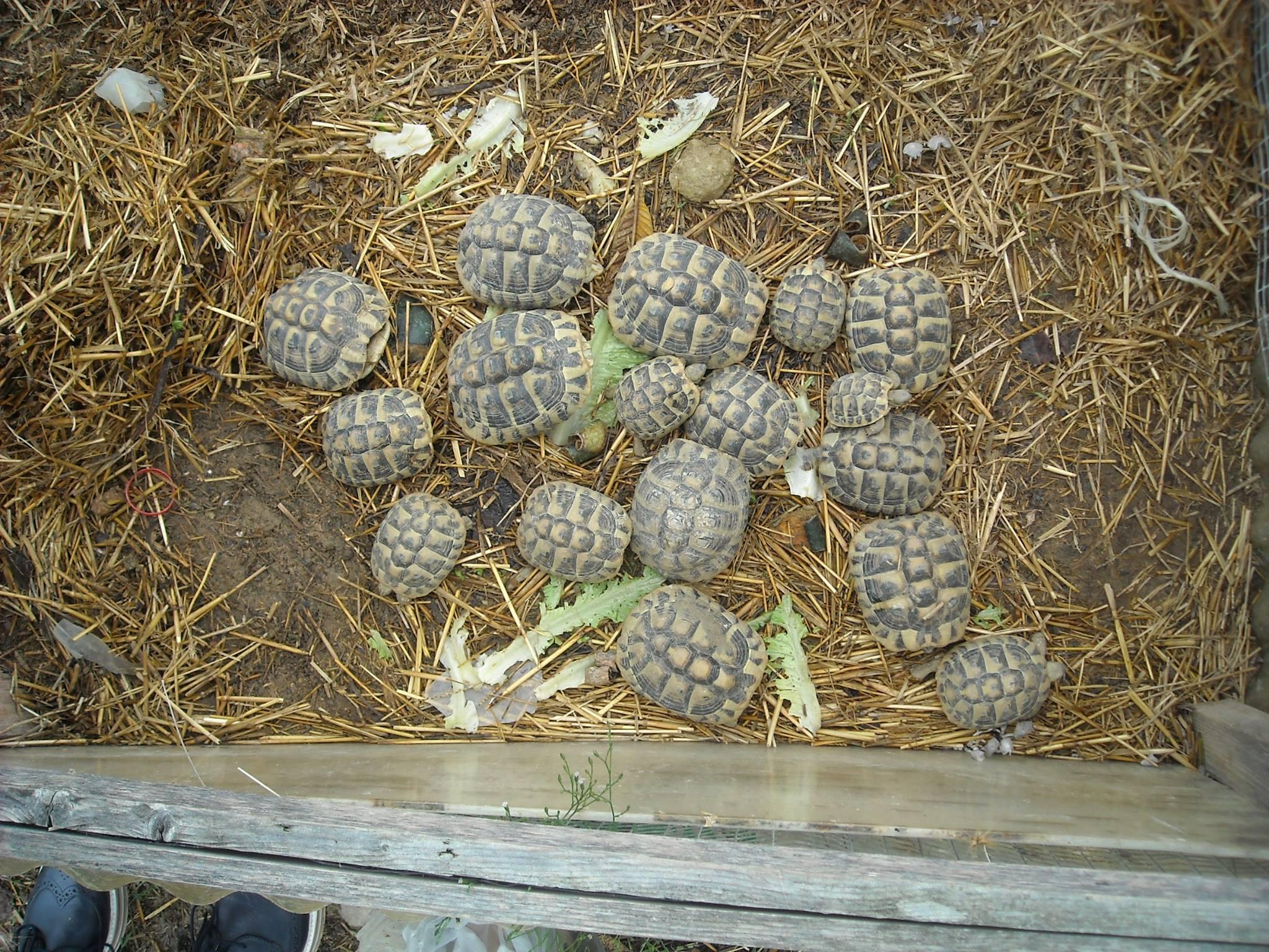 tartarughe illegali in vendita on line sequestri e una