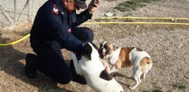 FERMO - Asta di cuccioli sequestrati